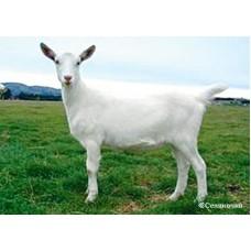 Комбикорма для коз
